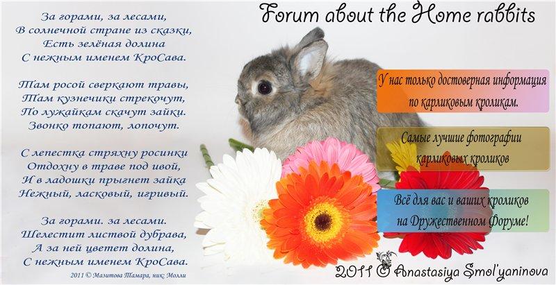 Прикольный стих про кролика